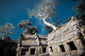 Ta Prohm Angkor Wat Combodia — Foto de Stock
