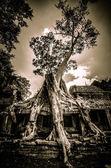 Cambodia, Siem Reap, Angkor Wat — Stock Photo