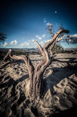 Death Valley dunes wood in HDR — Stock Photo