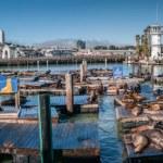 Sea lions at Pier 39 Panorama — Stock Photo