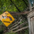 Cat crossing sign in Jerome ArizonGhost Town — Stockfoto #36671053