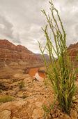 Grand Canyon National Park, Nevada — Stock Photo