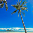 Panoramic tropical beach with coconut palm blue sky. Koh Samui, — Stock Photo