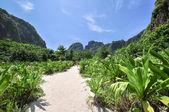 Jungle of Maya bay Phi Phi Leh island, Krabi Thailand, Asia — Stock Photo