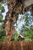 Cave on railay beach Krabi — Stock Photo