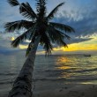 Coconut palms on sand beach in tropic on sunset. Thailand, Koh C — Stock Photo #39474689