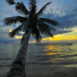 Coconut palms on sand beach in tropic on sunset. Thailand, Koh C — Stock Photo