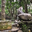 Long-tailed macaques (Macaca fascicularis) in Forest, Bali Ubud — Stock Photo