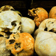 Stock Photo: Skulls from Killing Fields in Cambodia, this happened from a