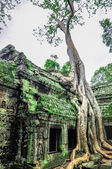 Giant tree covering Ta Prom and Angkor Wat temple, Siem Reap, Ca — Foto Stock
