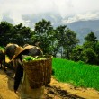 South China, Yunnan - 2011: Rice terraces in highlands — Stock Photo