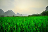 Li river mountain landscape in Yangshuo Guilin — Stock Photo