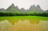 Guilin Li river Karst mountain landscape in Yangshuo — Stock Photo