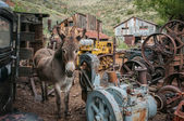 Jerome Arizona Ghost Town donkey — Stock Photo