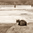 Cat on winter fishing, sepia — Stock Photo