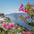 Purple bougainvillea on the island of Santorini — Stock Photo