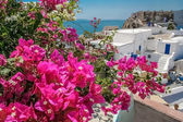 Balcony with bougainvillea on the island of Santorini — Stockfoto