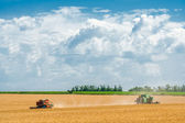 Harvesting of wheat harvesters in the background field and blue  — Stockfoto