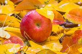 Rode appel in de regen — Stockfoto