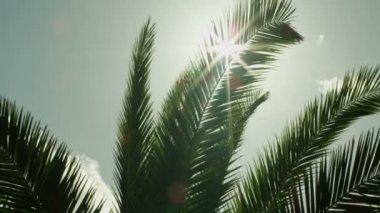 Reflexlicht durch palm-baum-blätter bei sonnenuntergang — Stockvideo