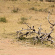 Stock Photo: Dead tree in veld background