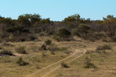Afrcian bushveld landscape — Stock Photo