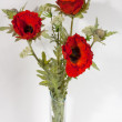 Bouquet of poppies in glass vase isolated — Stock Photo