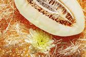 Piece of melon with chrysanthemum — Stock Photo
