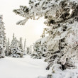 Winter trees in mountains — Stock Photo #42613497