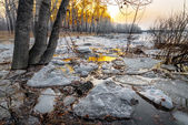 Melting snow — Stock Photo