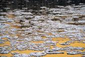 Su üzerinde kar — Stok fotoğraf