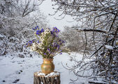 Winter forest flowers — Stock Photo