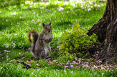 Photo of squirrel — Stock Photo