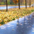 Wet weather autumnal alley with yellow red foliage and cold Rain — Stock Video #34632975