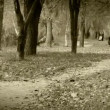 Stock Video: Alone little boy joyful bouncing walking in autumn park