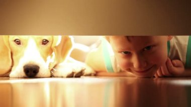 Laughing little boy with his best friend beagle dog under the bed — Stock Video