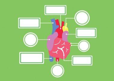Heart system vector cartoon
