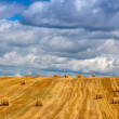 Постер, плакат: Стоги сена поле небо август Беларусь Straw bales in a field Belarus Farm Wheat Landscape Agriculture Outdoors Scenics Harvesting Summer Day Horizon Season Nature Cloud Sky