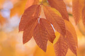 Colorful leaves in autumn — Stock Photo