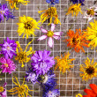Colorful Drying Flowers — Stock Photo