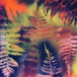Fern Abstract — Stock Photo
