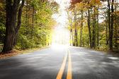 Autumn Drive, Light Tunnel — Stock Photo