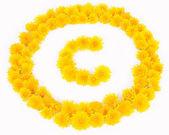 Mniszek lekarski praw autorskich — Zdjęcie stockowe