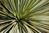 Fond de détail de cactus — Photo