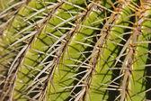 Cactus Detail Background — Stock fotografie