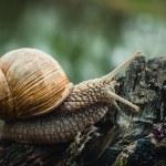 Snail on the tree — Stock Photo #48243301