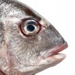 Sea bream fish head — Stock Photo