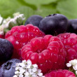 Full frame ripe raspberry and blueberries — Stock Photo