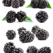 Big compilation of blackberries — Stock Photo
