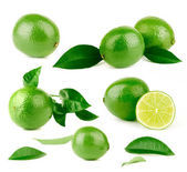 Lots of lime and green leaves — Stock Photo